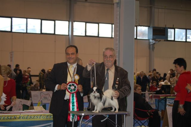 BOB and also best junior of the show.thanks to the judge